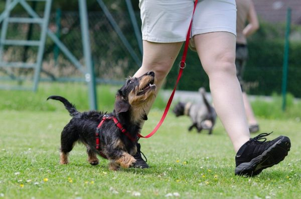 Things You Should Know About Training Your Dog